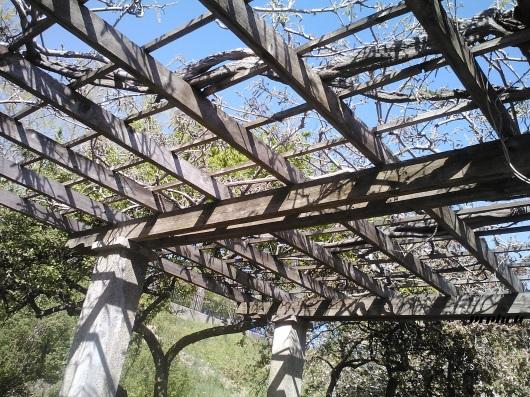 roof trellis