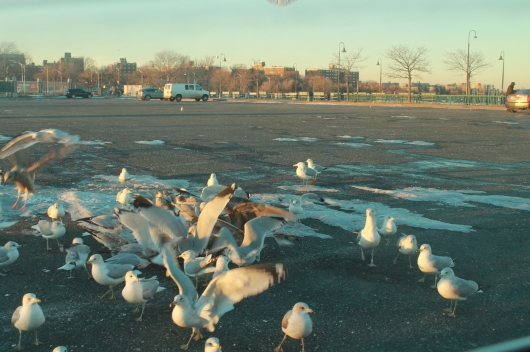 airborne gulls 9
