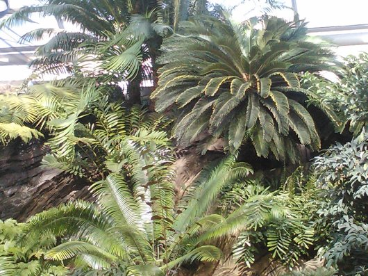 PALMS IN GREEN HOUSE