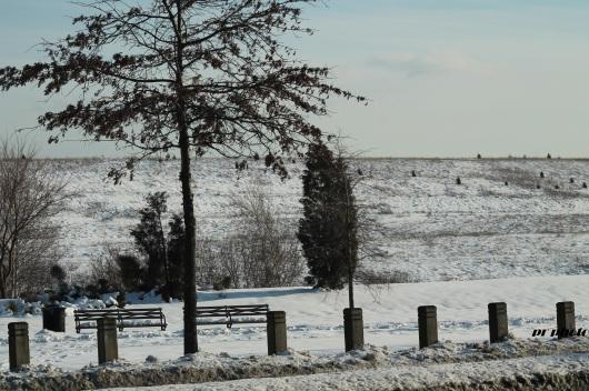 snow scape 2