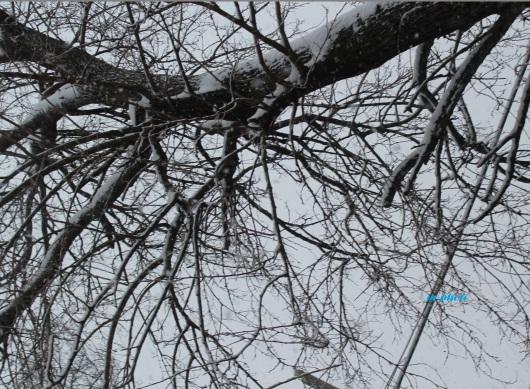 snow tree backyard