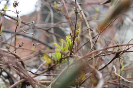spring runner
