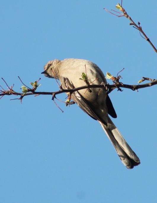 bird crop 2
