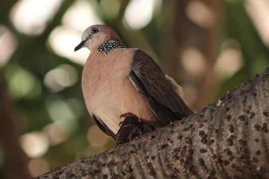 IMG_5482 bird