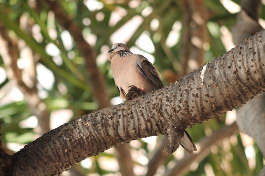 IMG_5483 bird 2
