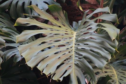 IMG_5728 big leaf