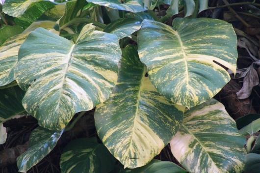 IMG_5730 leaf