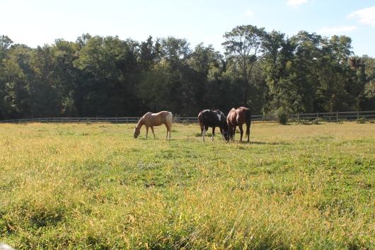 distant horses