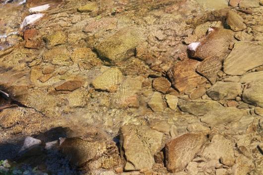 IMG_7517 creek bed