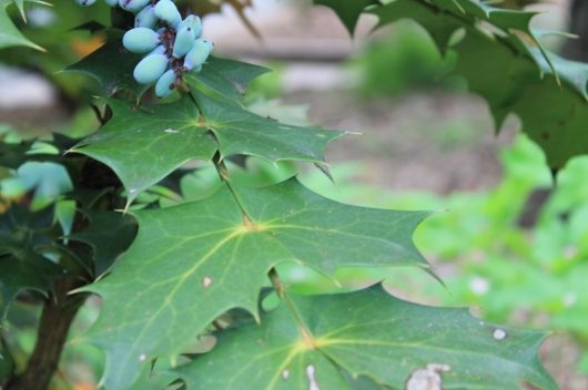 crazy shaped leaves