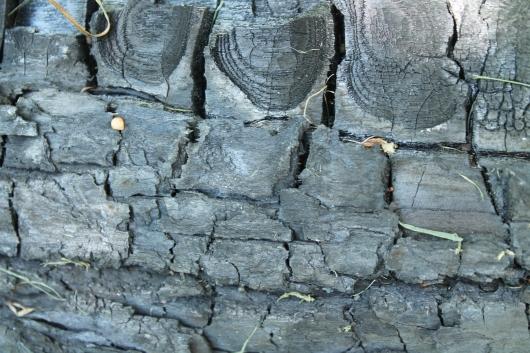 IMG_8334 burnt log