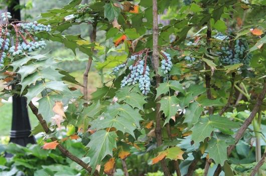 crazy shape leaves fruit