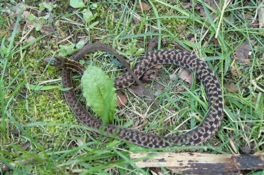 IMG_7384 snake