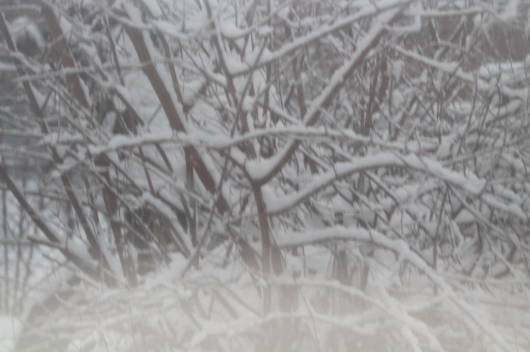 fog snow fence