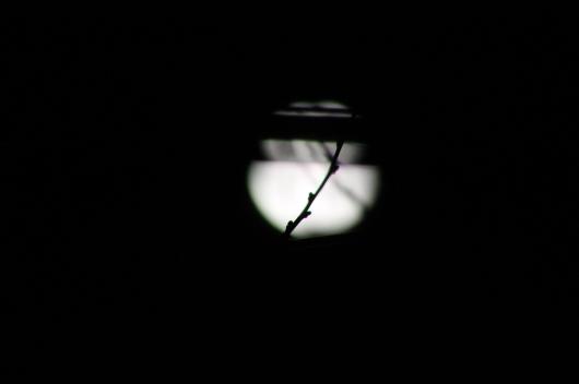 IMG_3462 moon