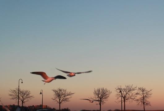 landing 2 cropped