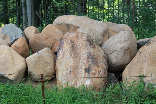 IMG_7820 rock garden