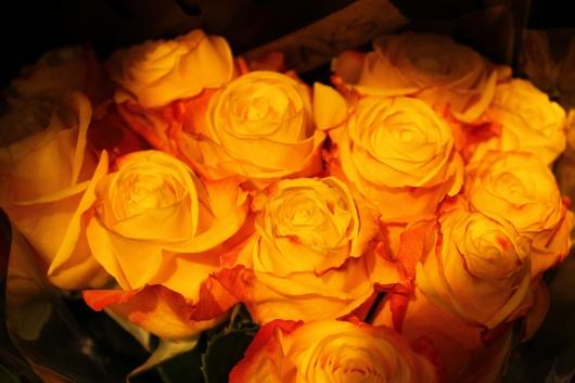IMG_9677 yellow flowers