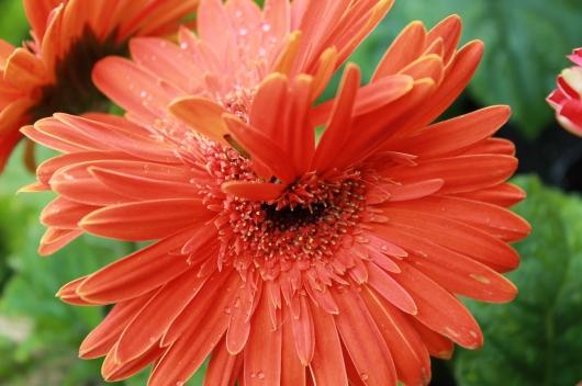 IMG_4036 orange flower