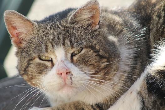 IMG_9965 cat
