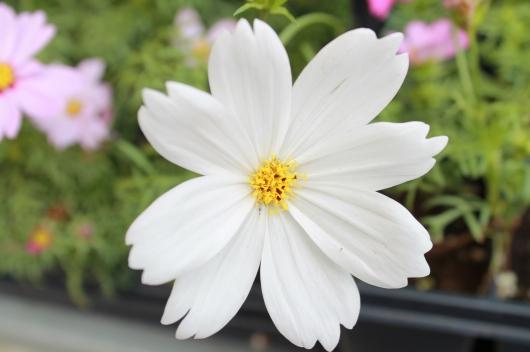 IMG_3908 white flower