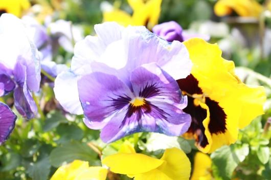 IMG_3919 flowers