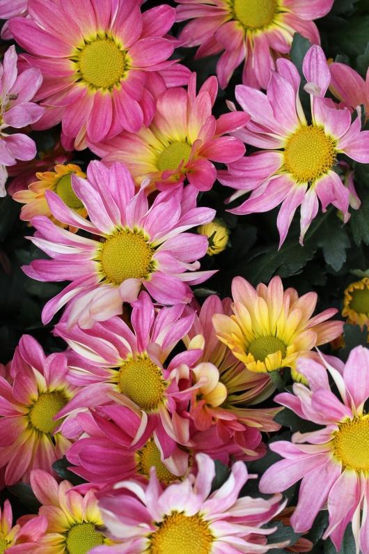 IMG_9668 fall flowers