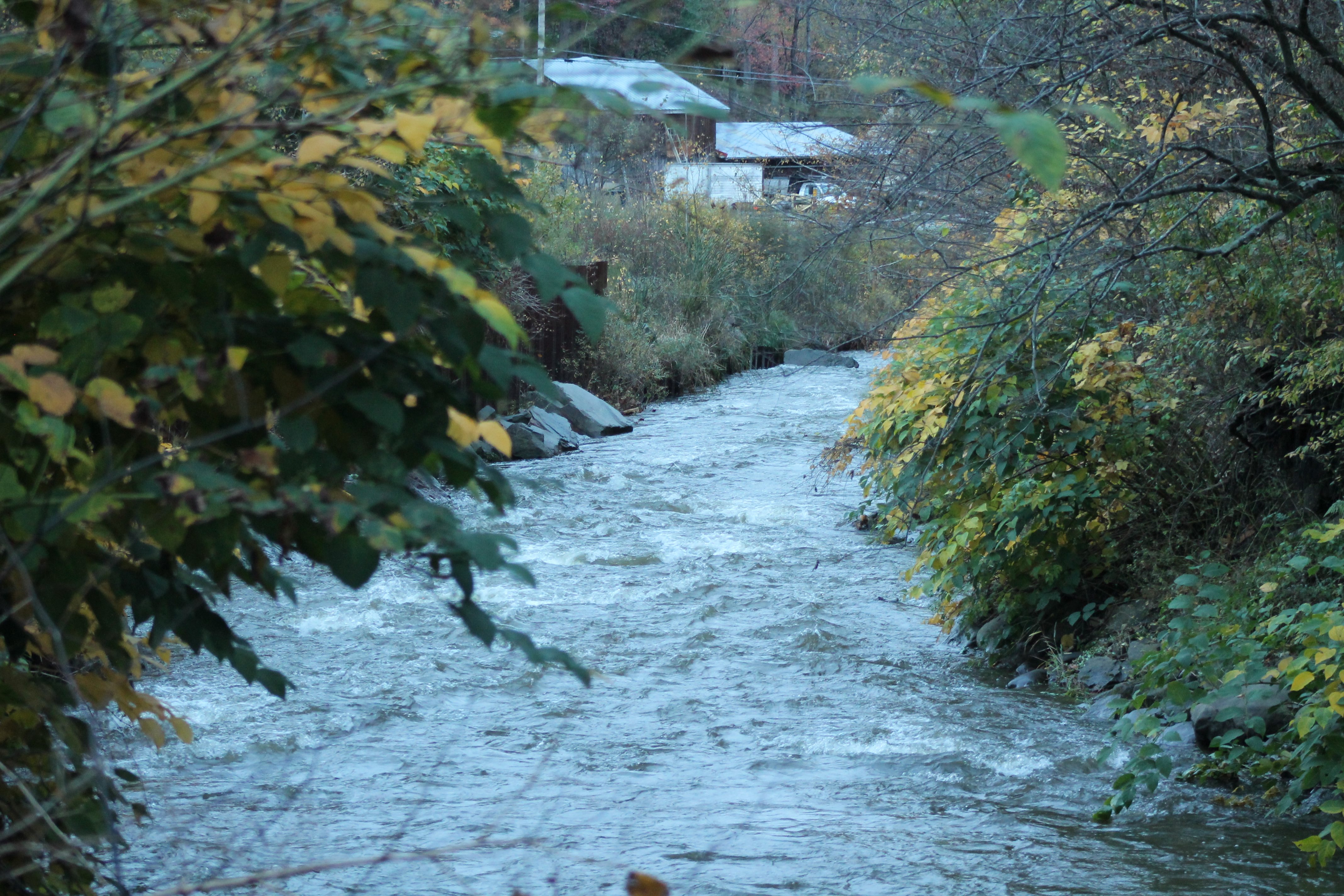 IMG_9884 down creek