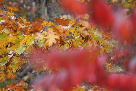 IMG_9828 fall leaves