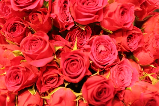 IMG_9676 red roses