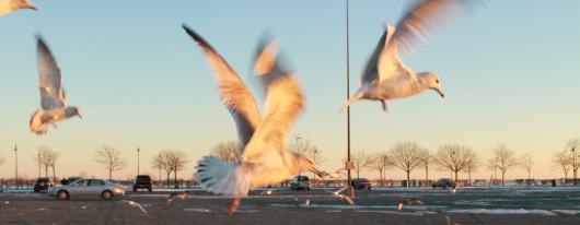 airborne gulls the best