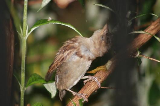 IMG_1609 bird head upside down