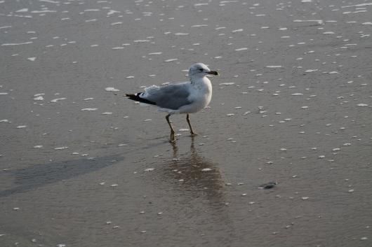 bird-ocean-img_2378