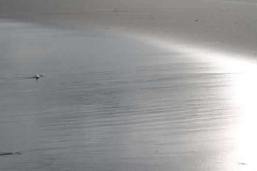 lone-bird-img_2346