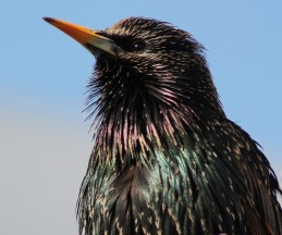 img_9999-bird