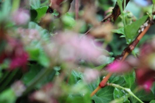 blurred-img_2518