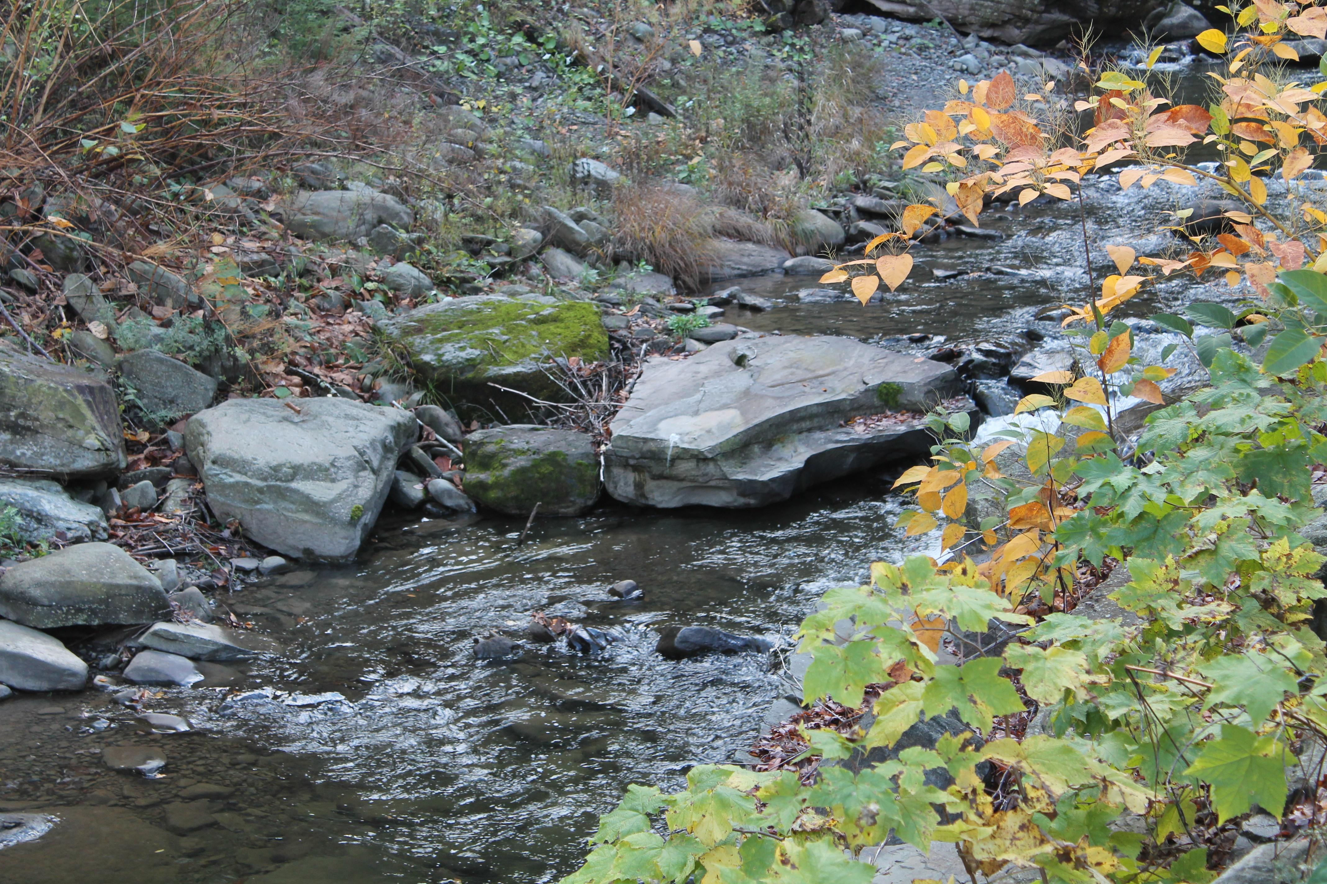 creek-img_2590