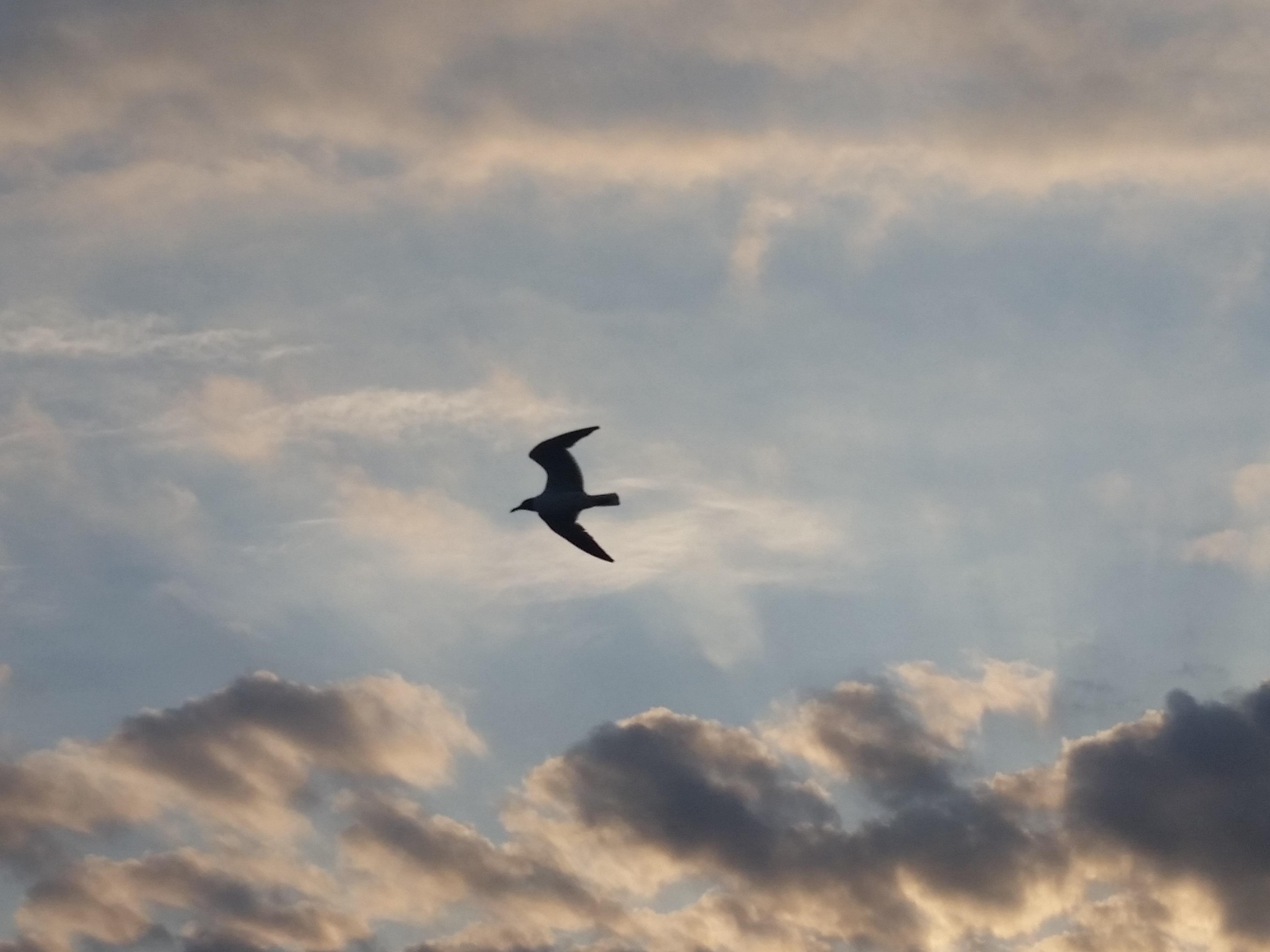 20160712_193105-bird-in-flight