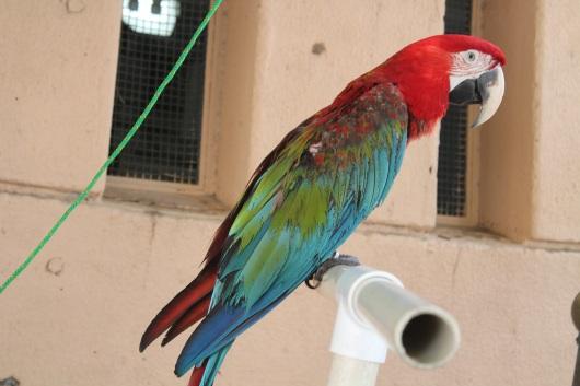 img_1954-parrot-bird