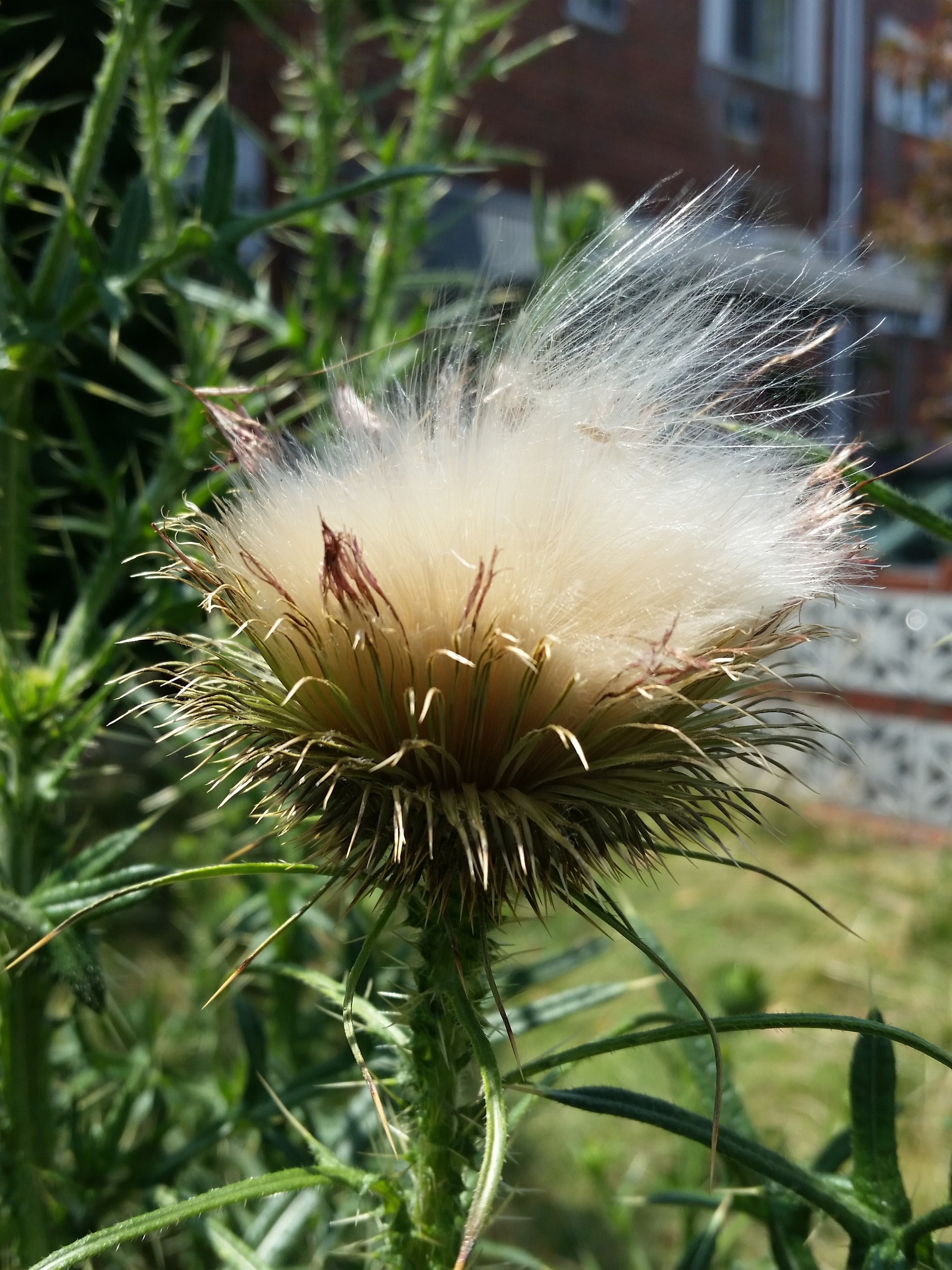 resilient-20160718_134239-feather-seed
