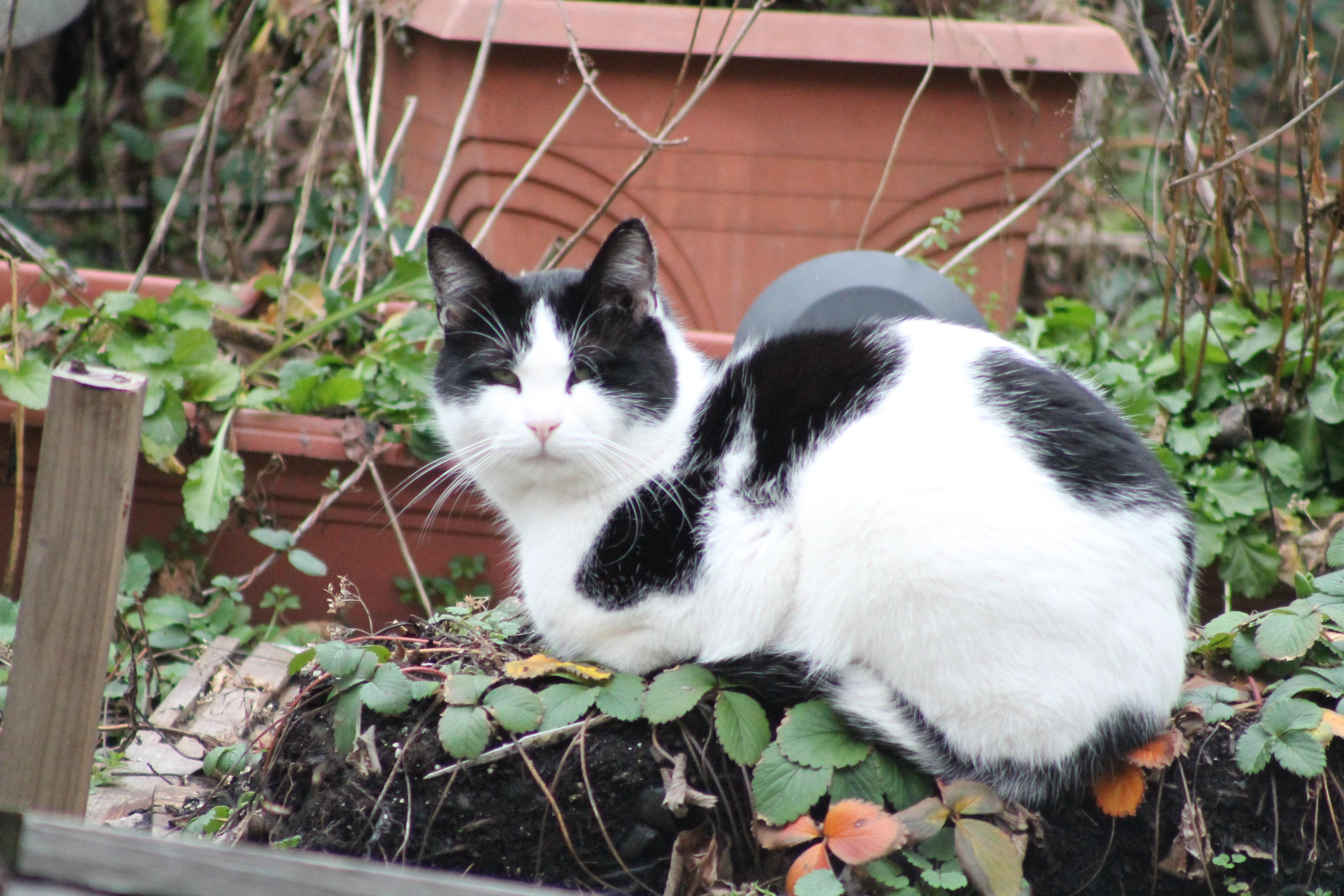 cat-strawberry-img_3113