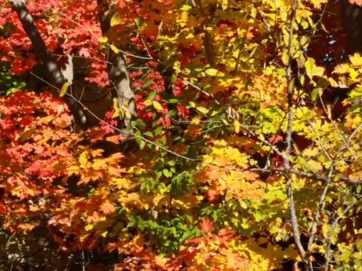 fall-20151026_123655