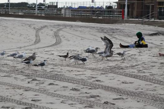 img_2337-gulls