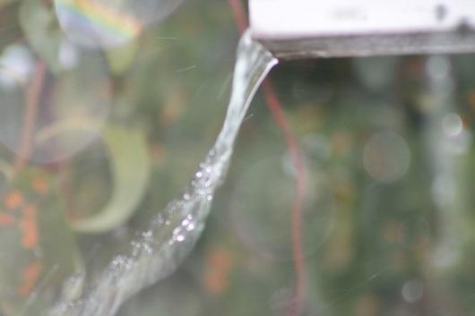 ODDBALL RAIN IMG_1604