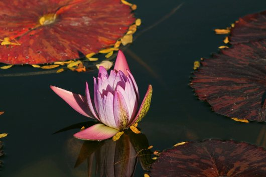 colors-2-lily-1-59050841.jpg