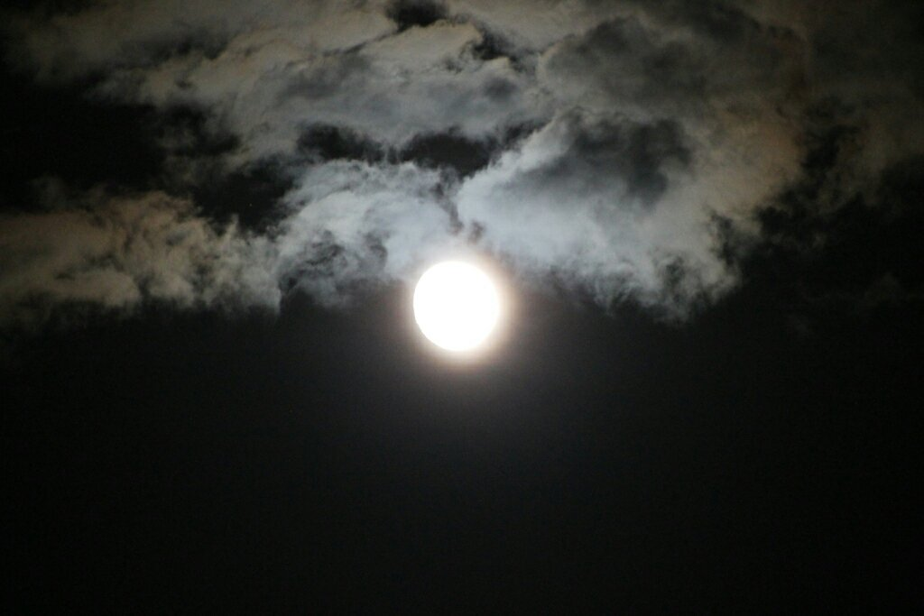 img_8806-full-moon-1636389854.jpg