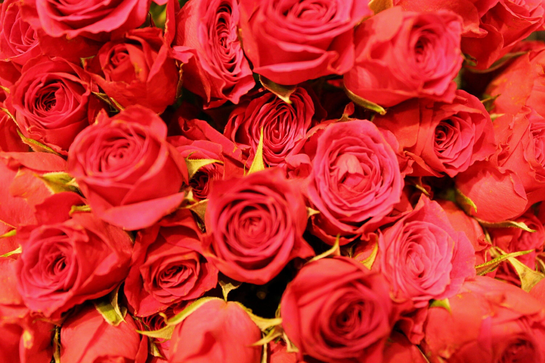 img_9676-red-roses-1833439335.jpg