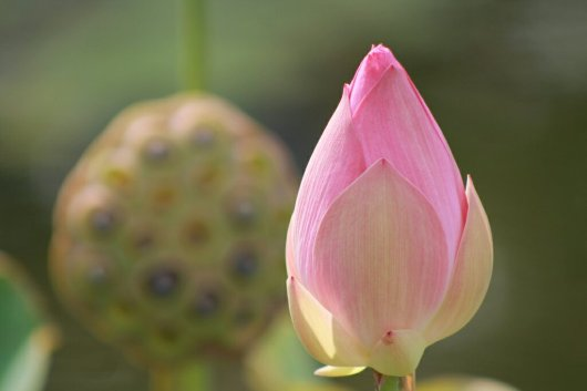 img_8192-pink-flowers1323025948.jpg