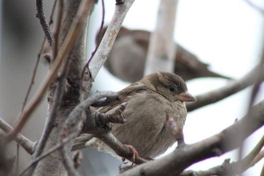 IMG_3758 birds.JPG